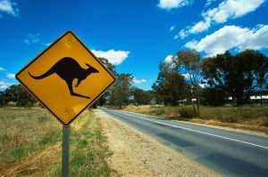 kangaroo warning road sign, Barossa Valley, South Australia