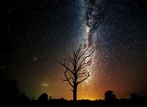 Milky Way over old dead tree