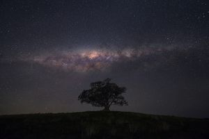 milkyway above tree