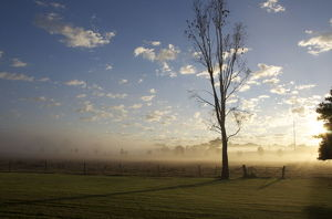Morning in mudgee