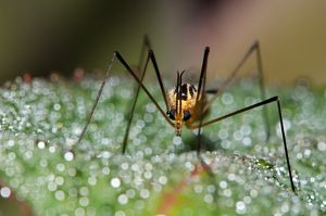 Mosquito on bokeh background