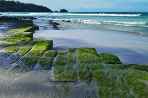 Moss covered rock formation at beach, Tessellated Pavement, Tasmania