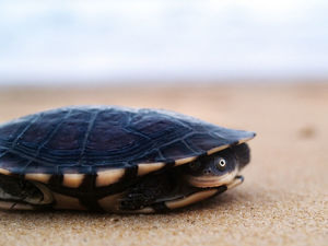 Pet turtle on beach