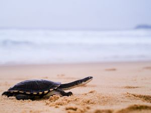 Pet turtle running along sand by sea
