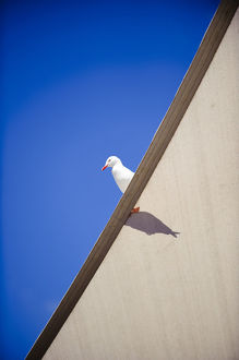 Seagull sits on canvas