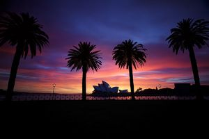 Silhouette of trees with Opera House