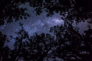 Stars of The Milky Way over gum trees