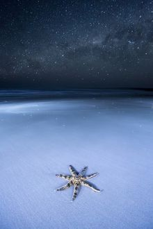 Starfish on a beach and the Milky Way. Australia