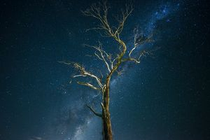 Tree with Milky way