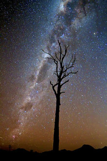 Tree under stars and the Milky Way