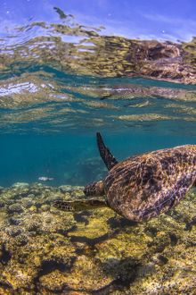 turtle swimming away