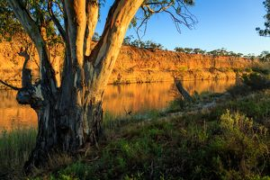 Waikerie. River Murray. South Australia.
