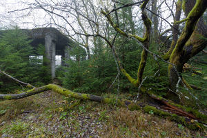 Abandoned tin ore mine facitlity, gnarled deciduous tree, moss