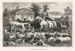 American farm yard engraving 1873