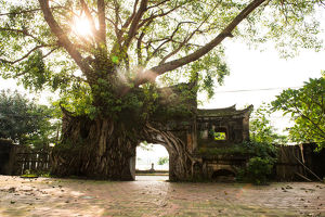 travel/photographer collections tran tuan viets vietnam/ancient gate cover banyan tree
