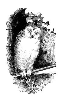 Antique children's book comic illustration: owl
