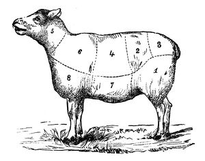 Antique recipes book engraving illustration: Mutton sections