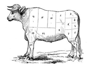 Antique recipes book engraving illustration: Beef sections