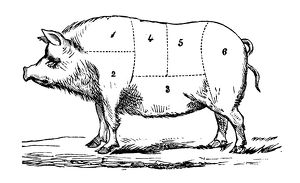 Antique recipes book engraving illustration: Pork sections