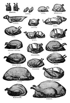 Antique recipes book engraving illustration: Poultry and gamebirds