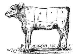 Antique recipes book engraving illustration: Veal sections