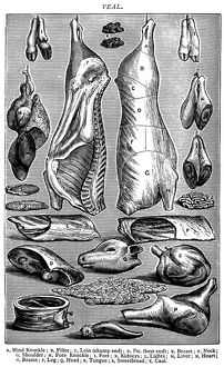 Antique recipes book engraving illustration: Veal