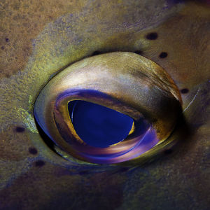 Artistic Grouper eye