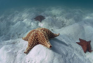 nature wildlife/andrey narchuk photography/atlantic coast dominican rep shallow white sand