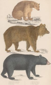 collections/heritage images/bears