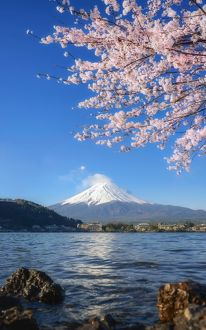 travel/destinations spectacular mt fuji views/beautiful cherry blossoms mount fuji morning lake