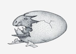 Black and white illustration of young Maiasaura dinosaur emerging from egg