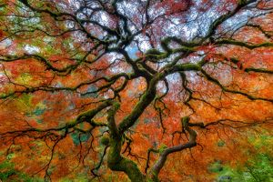 Branching Out in Autumn