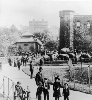 Children In Central Park Zoo
