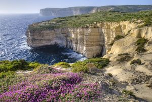Cliffs with wildflowers