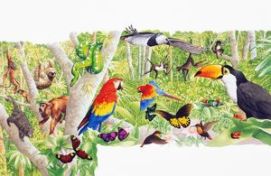 Colorful selection of tropical animals, birds, and insects