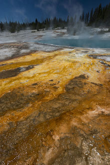 Colorful thermophile design run-off from Black Pool, West Thumb Geyser Area, Yellowstone