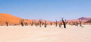 <b>Dead Vlei, Namib-Naukluft Park, Namibia</b><br>Selection of 114 items