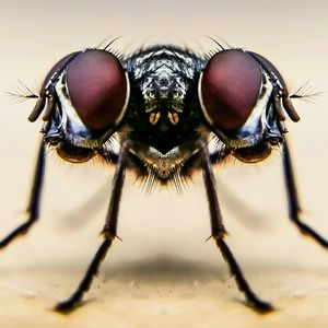 Digital Composite Image Of Housefly