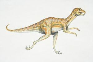 Dromaeosaurus, red and black striped dinosaur with strong hind legs, side view