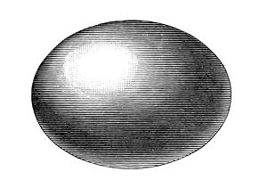 egg , ellipsoid
