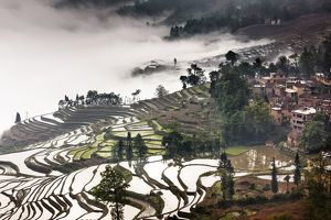 Fog shrouded terraces