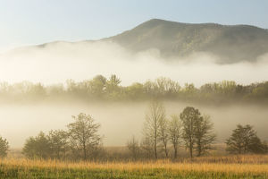 Foggy morning, Cades Cove, Great Smoky Mountains National Park, Tennessee, USA