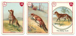 Three fox playing cards Victorian animal families game