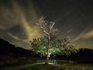 Great tree walnut in a zone of picnic one night with sky of stars and clouds