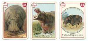 Three hippopotamus playing cards Victorian animal families game