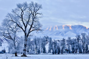 Hoarfrost on trees in mountain valley, Shell, Big Horn County, Wyoming, USA