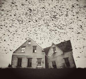Home of Murmuration
