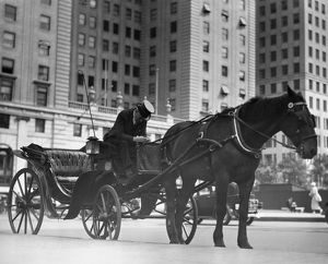 Horse drawn carriage, NYC