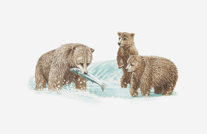 Illustration of brown bear catching fish and two young bears looking on