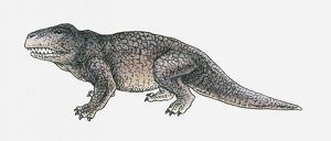 Illustration of an Erythrosuchus, a thecodont archosaur, Triassic period